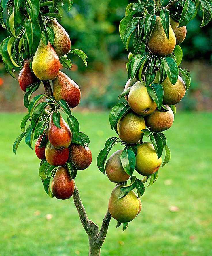 149 Best Images About Frutas Y Vegetales On Pinterest
