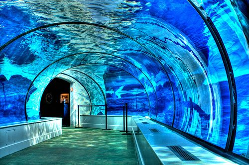 I need to visit this place. Polar Bear and Seal Underwater Tunnel, Detroit Zoo, Michigan