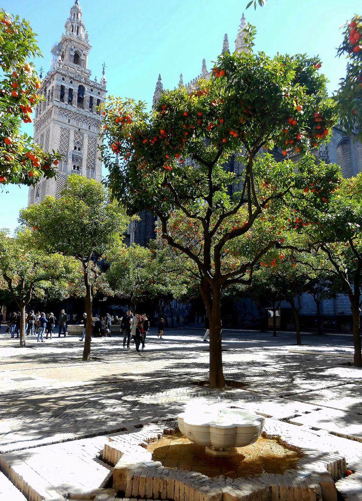Patio de los Naranjos, Catedral de Sevilla, by @aransampedro