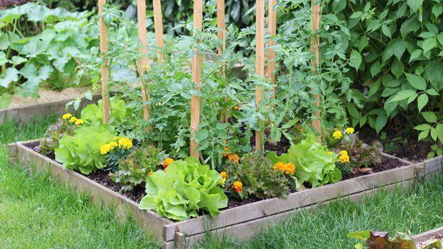 Plus de 1000 idées à propos de jardin sur Pinterest  Culture ...