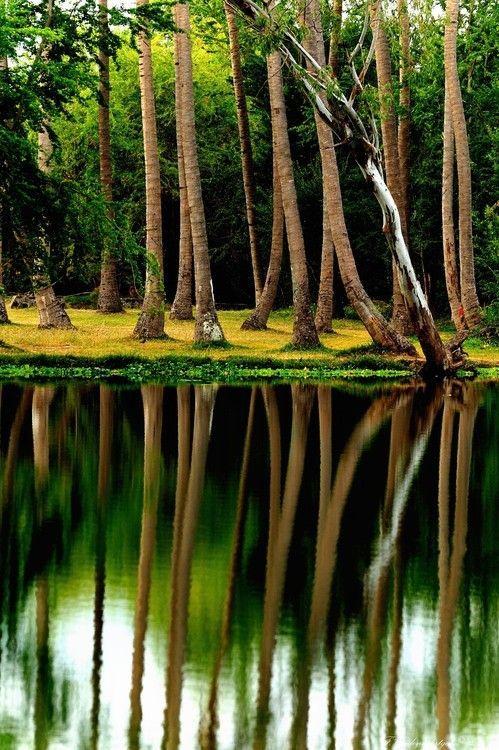 Reflection, Reunion Island photo via ramon