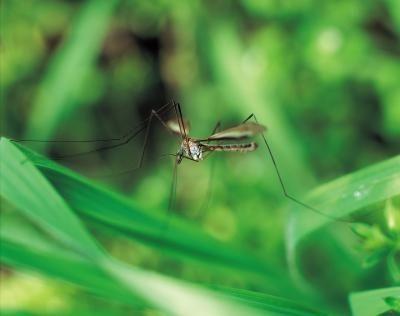 Cómo repeler mosquitos con una planta de citronela | eHow en Español