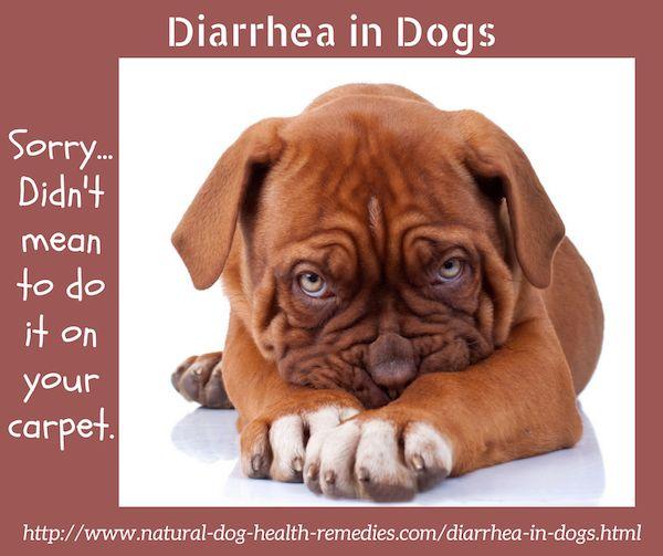 Treat diarrhea in dogs using natural herbal remedies.