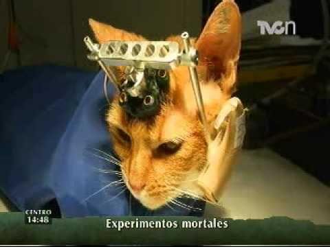 ▶ Revelan imágenes de experimentos con animales