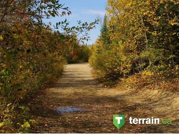 un beau sentier d'automne, on se croirait plongé dans le passé à Val d'Or!