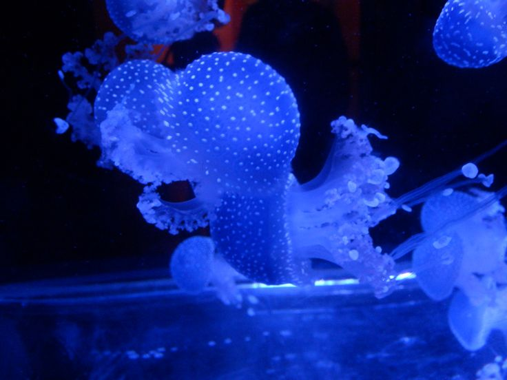 Jellyfish :))