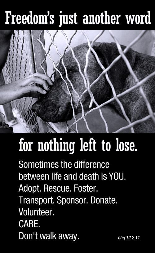 What are the reasons for why dogs are put in animal shelters?
