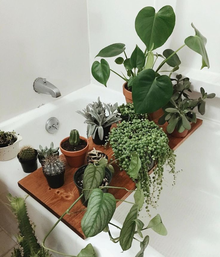 The 25+ Best Bathroom Plants Ideas On Pinterest | Plants In Bathroom, Plants  Indoor And Indoor Plants Low Light