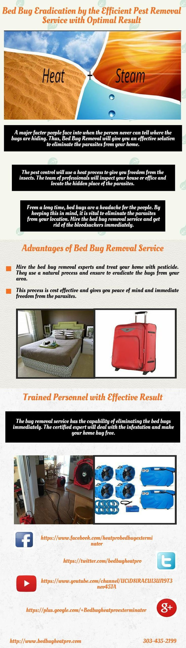 feeding bed security magnified bug control removal service