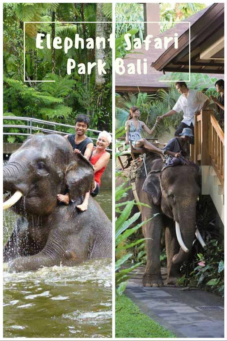 things to do in indonesia 17 Elephant Safari Park Bali