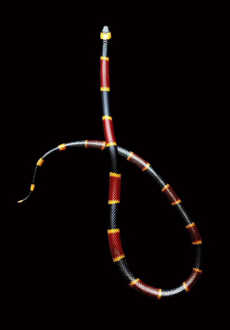 The second warning is a surprise gift.  Eastern coral snake (Micrurus fluvius) is commonly found in the south eastern US.  Other species in this genera can be found in Mexico, Central and northern South America.  There are two other genera of New World species and three genera of Old World species.