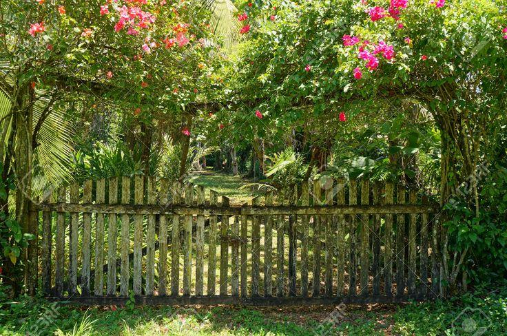 1225 mejores im genes sobre tropical garden en pinterest for Banano de jardin