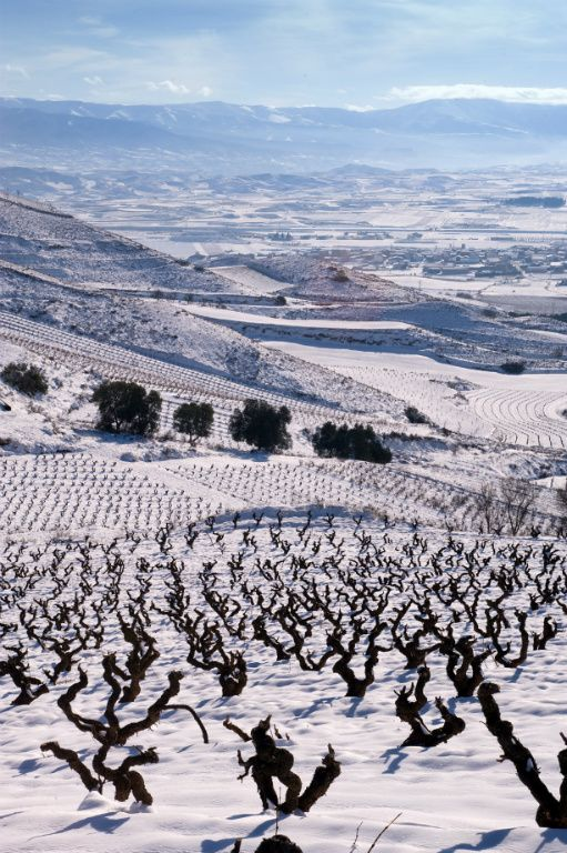 Rioja Alta vineyard in the snow photo by Friederike Paetzold