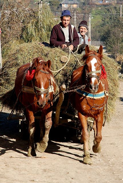 Horse and cart, Maramures.