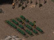 http://fallout.wikia.com/wiki/Spore_plant_(Fallout_2)