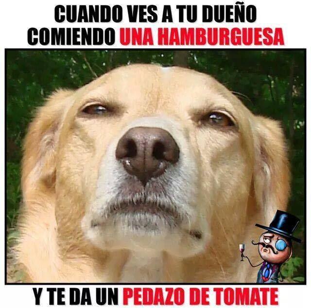 APRENDER A REÍR A CARCAJADAS #memes #chistes #chistesmalos #imagenesgraciosas #humor