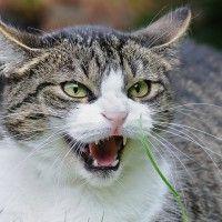 #dogalize Gato enfadado: ¿Cómo calmar a mi gato enfadado? #dogs #cats #pets