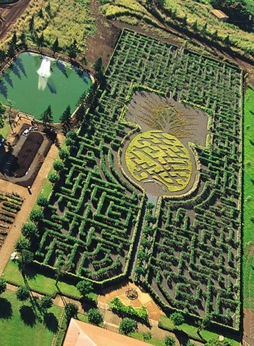 "The Dole Pineapple Plantation on the North Shore of Oahu features a giant pineapple maze! From Guinness world records: ""The longest pathway in a permanent hedge maze measures 3,962.71 m (13,001 ft) and is held by the Pineapple Garden Maze at the Dole Plantation in Wahiawa, Hawaii, USA. The maze has a total area of 12,745.79 m (3.15 acres), it opened during 1997 and expanded in size in July 2007."""