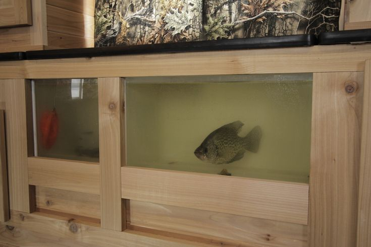 A just-caught crappie swims in an illuminated aquarium built into the wall, powered by an automatic pump that draws fresh water from the lake; a second tank holds bait minnows.