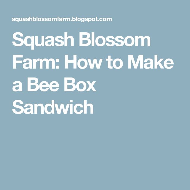 Squash Blossom Farm: How to Make a Bee Box Sandwich