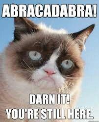 "Grumpy cat's so called ""Magic tricks"""