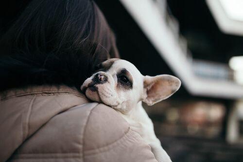 Dónde Puedo Adoptar Un Perro En Madrid Descubre Todos Los Sitios Dogs And Kids Pet News Dogs Hugging