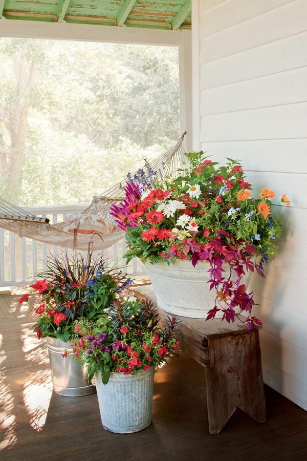 Take advantage of seasonal sales at your local nursery, and stock up on popular plants. Keep them in their nursery pots, and display them in galvanized buckets on the porch until you are ready to plant them in your garden. Recreate this look with gerbera daisies, salvias, shasta daisies, daylilies, and sweet potato vines.  Similar galvanized pots here.