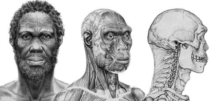 """HOMO SAPIENS: Se originó en algún lugar de África hace alrededor de 150.000 años. Las herramientas de nuestra especie pertenecen all llamado """"Modo IV"""". Tiene una anatomía igual a la nuestra y una gran capacidad cerebral, talla media actual entre los varones caucásicos hacia los 21 años es de 1,75 m, la talla media de las mujeres caucásicas es de 1,62 m, y los pesos promedios respectivos son de 75 kg y 61 kg."""