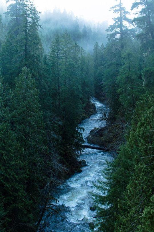 Il fiume che passa sotto il Kinsol Trestle Bridge, sull'isola di Vancouver BC.