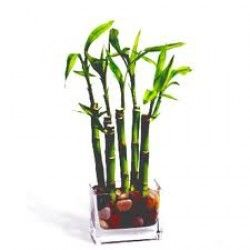 6 Lucky Sticks with pebbles in a glass vase http://thetradeboss.com/deals_detail.php?id=55