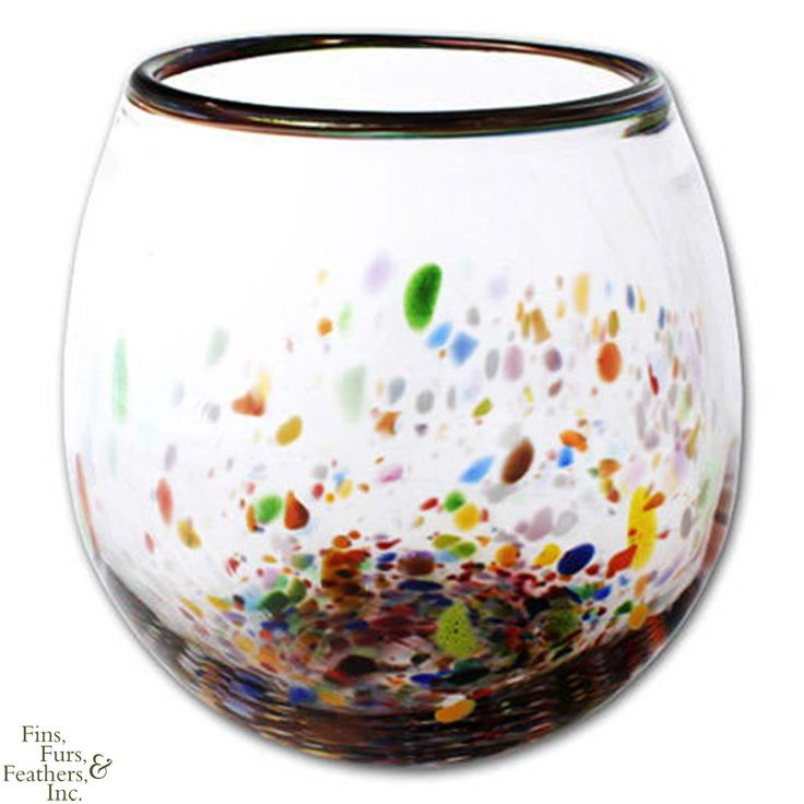 67 best images about improper betta homes on pinterest for Betta fish vase