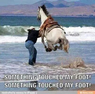 Must be a Californian horse lol