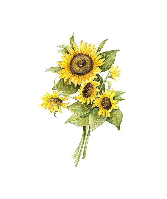 Sunflower Floral Botanical Print by WatercolorsByMonika on Etsy,
