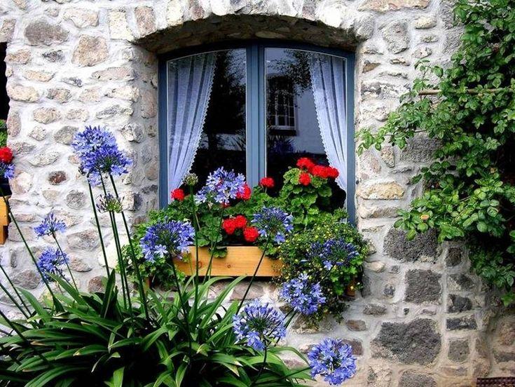 Agapanthus And Window Box Cottage Windows Window Box