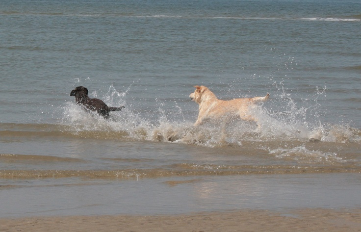 Trisha and Yasmine, chasing each other in the sea