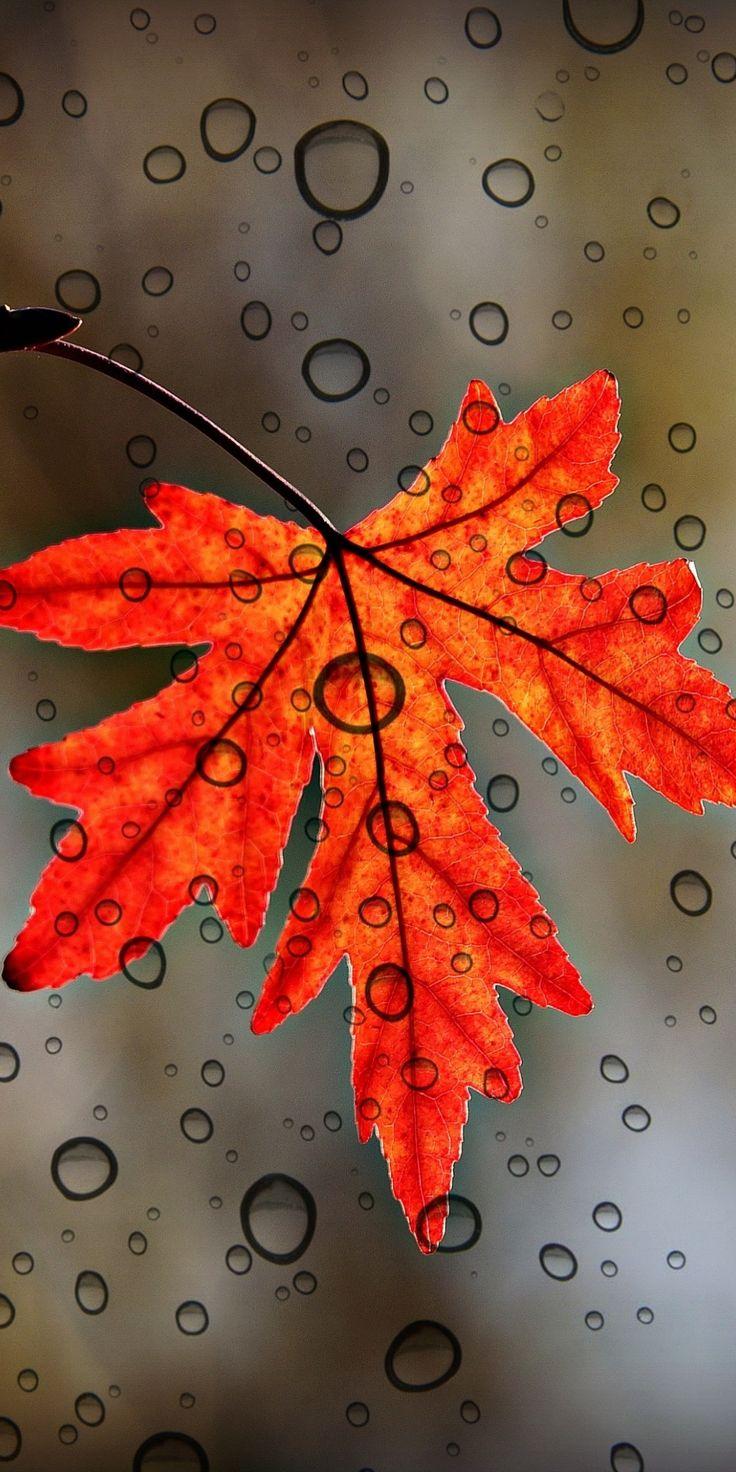 Leaf, orange, close up, drops, 1080x2160 wallpaper Leaf, orange, close up, drops, 1080x2160 wallpaper