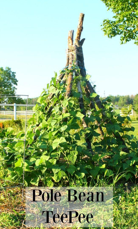 48e01dc23730f49f13eb5575efaf5ba2 - Quintessential Gardens At Fort Hill Farms
