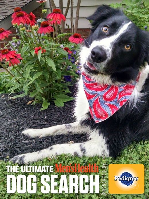 Help my #border collie become The Ultimate Men's Health Dog. Vote Today! #MHDogContest