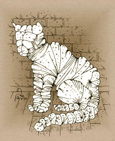 Paul Livingston flacco author comedian Australia | Christo's Cat