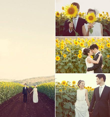 super cute wedding portraits in a sunflower field.