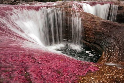 Caño Cristales, located in the Sierra de la Macarena - Colombia.  It is known as the river of five colors, because the production of algae, which form a rainbow on his bed just 100km beauty (waterfalls)