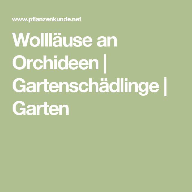 Wollläuse an Orchideen | Gartenschädlinge | Garten