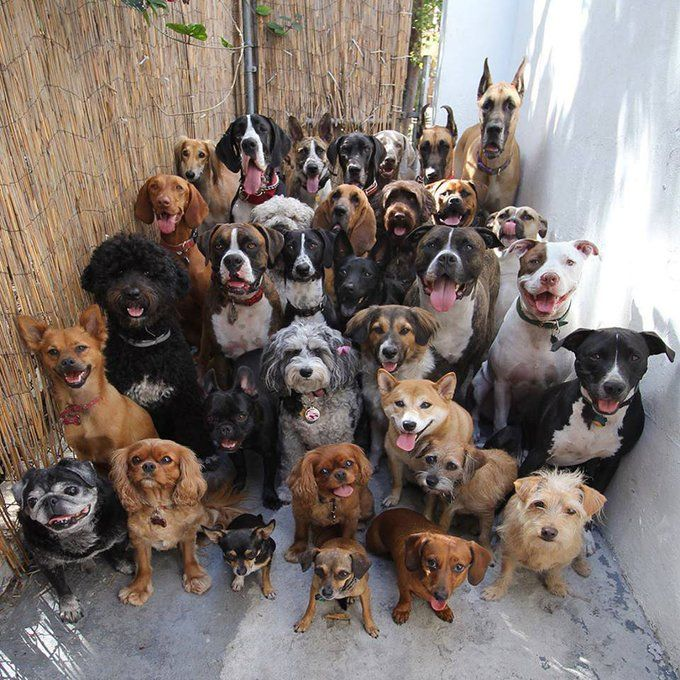 30 dogs posing and looking straight at the camera..
