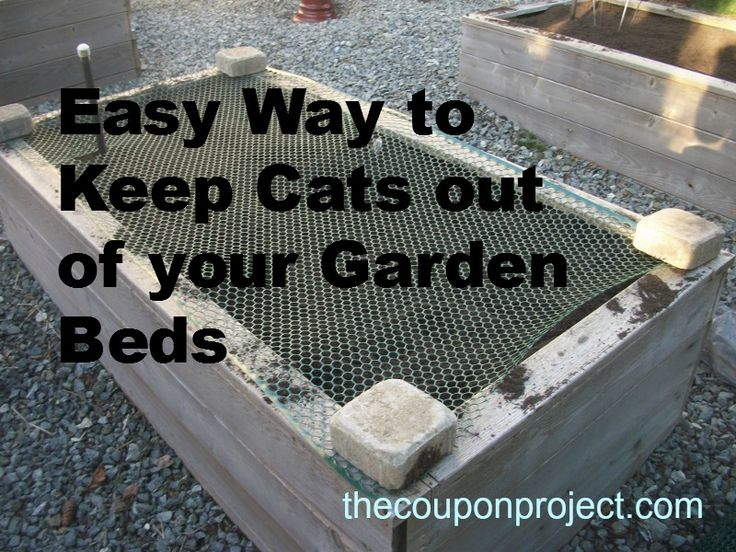 1804 Best Images About Gardening Info Tips Projects On