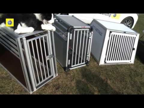 TCS-Test: Hundeboxen - YouTube