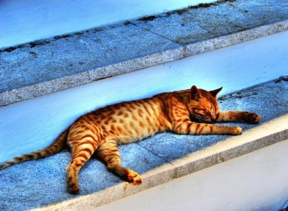 A glad Greek cat