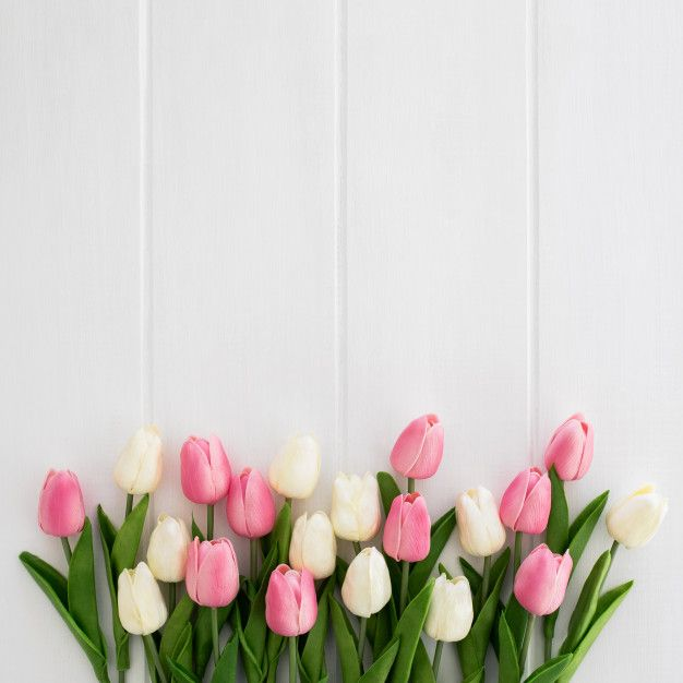 Download Beautiful Tulips White And Pink On White Wooden Background For Free Flower Phone Wallpaper Flower Backgrounds Tulips