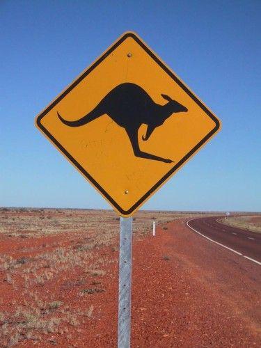 Australie : Le kangourou