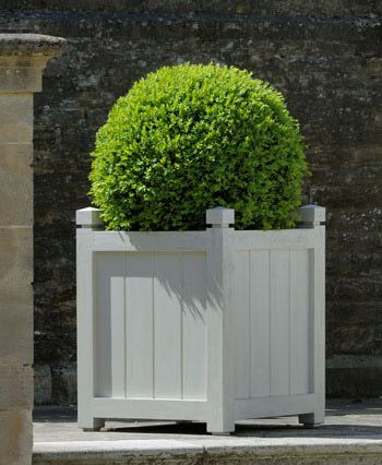 New England style.  I love the planter, but I don't want to have to keep with managing a shape of the bush.                                                                                                                                                                                 More
