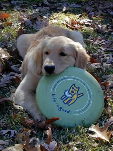 "Adorable dog with frisbee, You're right little guy ""Life is Good"""